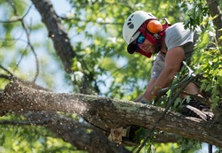 North Conway, Professional Tree Pruning